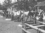 Scuderie Magona d'Italia. Anni '30